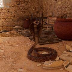 公元前一世纪,某座埃及民居中的蛇