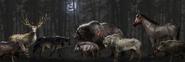 ACOD Legendary Animals Concept Art - Gabriel Blain