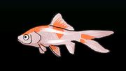 CometfishACP