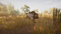 ACOD Krokottas Hyena