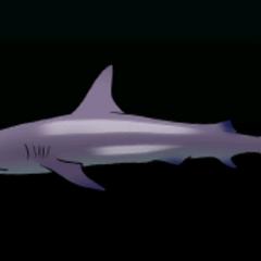 加拉帕戈斯鲨鱼 - 稀有度:普通,尺寸:大