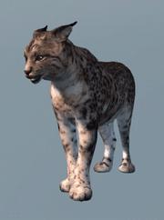 ACIII Lynx base de données