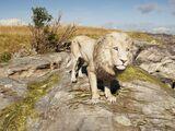 Makedonian Lion