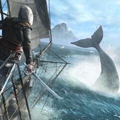 爱德华在<i>寒鸦号</i> 上追猎鲸鱼