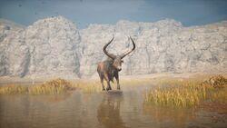 ACOD Kretan Bull