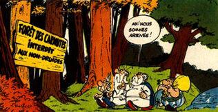Forêt1