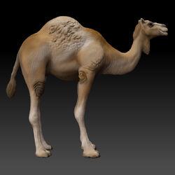 Camel Render
