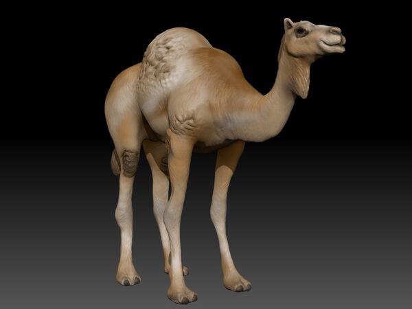 Camel ZBrushRender