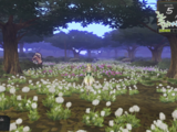 Half-Florescent Field