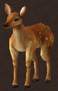 Chief Deer