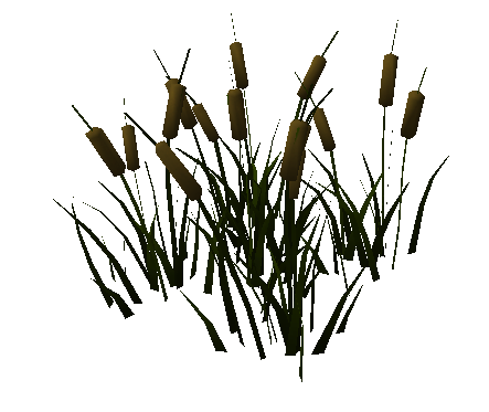 File:River reed.png