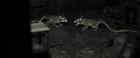 Rats talk