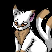 Whitebrowncat1