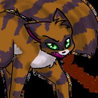 Brownstripedcat1