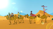 Sui cammelli