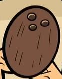 Owen con cocco