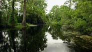 Everglades & Ally-Gators (478)