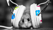 5582-4281-dubstep-hamster-1366x768-music-wallpaper-by-andon29