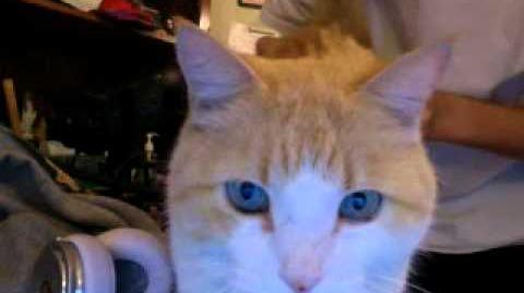 NEVER BEFORE SEEN - my 2nd cat Anthony!! - Austin Mahone