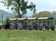 Croc Safari