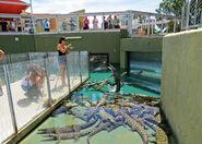 Darwin Crocosaurus Cove Fishing