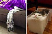 Cats are Liquid 4