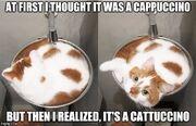 Cats = liquid