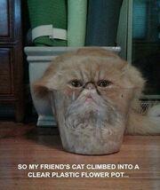 Cats Are Liquid 3