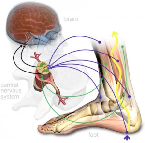 File:Proprioception-300x294.jpg