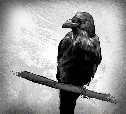 File:Crow.jpg