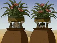 2х11 Горшки с цветами