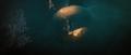 Film - Ocean and Moon Spirits.png