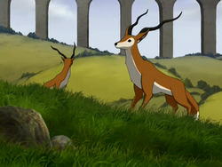 Fox antelope