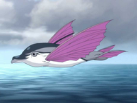Flying dolphin fish