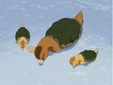 Turtle duck