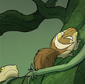 Squirrel toad.png