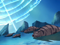 Tiger seal.png