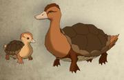 Pato tortuga anatomia