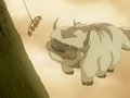 Appa and Momo.png