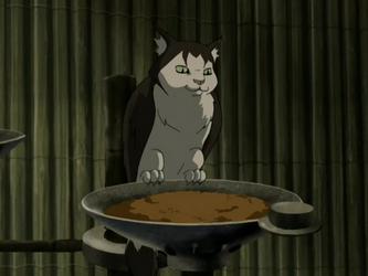 Cat owl | Avatar Wiki | FANDOM powered by Wikia