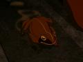 Wood frog.png
