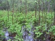 Southwestern Forest