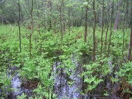 File:Southwestern Forest.jpg