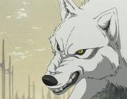 Kiba-wolfs-rain-4181068-640-480