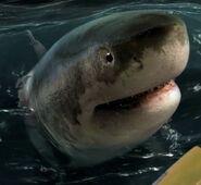Robert Rodriguez as Shark (Voice)