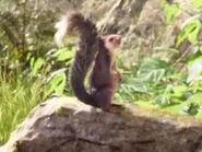Sam Raimi as Giant Squirrel (Voice)