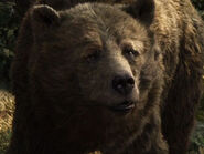 Bill Murray as Baloo (Voice)