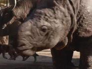 Madeleine Favreau as Raquel the Rhino (Voice)