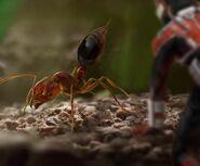Ant-Man - Konzeptzeichnung 52