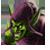 Der Grüne Kobold Icon
